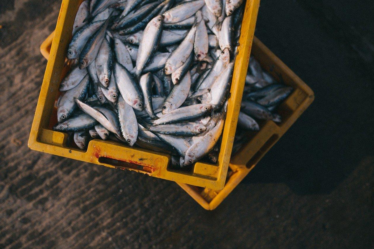 fish, catch, box